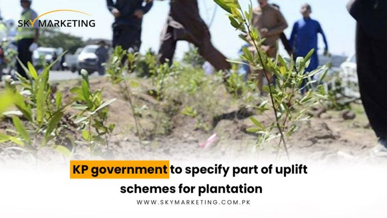 KP-government-to-specify-part-of-uplift-schemes-for-plantation